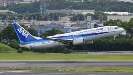 saoya_saodakeさんが、伊丹空港で撮影した全日空 737-8ALの航空フォト(飛行機 写真・画像)