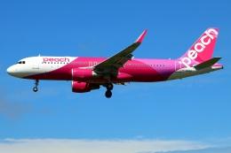 Tomo_mczさんが、成田国際空港で撮影したピーチ A320-214の航空フォト(飛行機 写真・画像)