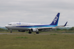 North1973さんが、稚内空港で撮影した全日空 737-881の航空フォト(飛行機 写真・画像)