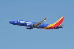 小弦さんが、ノーマン・Y・ミネタ・サンノゼ国際空港で撮影したサウスウェスト航空 737-8-MAXの航空フォト(飛行機 写真・画像)
