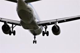 774gonさんが、稚内空港で撮影した全日空 A320-211の航空フォト(飛行機 写真・画像)