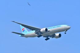 航空フォト:HL8076 大韓航空 777-200
