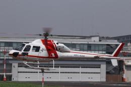 KAZFLYERさんが、東京ヘリポートで撮影した朝日航洋 AS355F2 Ecureuil 2の航空フォト(飛行機 写真・画像)