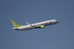 344さんが、羽田空港で撮影した全日空 737-881の航空フォト(飛行機 写真・画像)