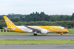 Y-Kenzoさんが、成田国際空港で撮影したスクート 787-8 Dreamlinerの航空フォト(飛行機 写真・画像)
