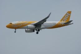 磐城さんが、シンガポール・チャンギ国際空港で撮影したスクート A320-232の航空フォト(飛行機 写真・画像)
