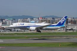 神宮寺ももさんが、福岡空港で撮影した全日空 787-8 Dreamlinerの航空フォト(飛行機 写真・画像)