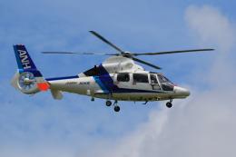 flyskyさんが、成田国際空港で撮影したオールニッポンヘリコプター AS365N3 Dauphin 2の航空フォト(飛行機 写真・画像)