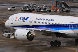 ぐっちーさんが、羽田空港で撮影した全日空 787-8 Dreamlinerの航空フォト(飛行機 写真・画像)