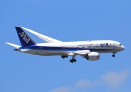 LOTUSさんが、伊丹空港で撮影した全日空 787-8 Dreamlinerの航空フォト(飛行機 写真・画像)