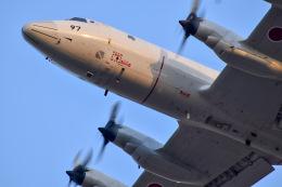 かとそさんが、厚木飛行場で撮影した海上自衛隊 P-3Cの航空フォト(飛行機 写真・画像)