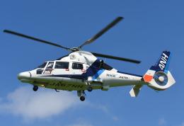 チャーリーマイクさんが、東京ヘリポートで撮影したオールニッポンヘリコプター AS365N3 Dauphin 2の航空フォト(飛行機 写真・画像)