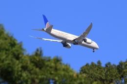 Hiro-hiroさんが、羽田空港で撮影したユナイテッド航空 787-9の航空フォト(飛行機 写真・画像)