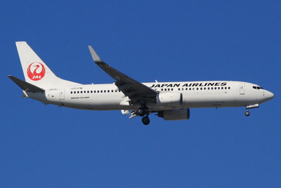 キイロイトリさんの日本航空 Boeing 737-800 (JA319J) 航空フォト