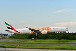 チョロ太さんが、成田国際空港で撮影したエミレーツ航空 777-31H/ERの航空フォト(飛行機 写真・画像)