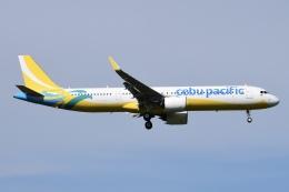 Timothyさんが、成田国際空港で撮影したセブパシフィック航空 A321-271NXの航空フォト(飛行機 写真・画像)