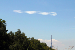 AkiChup0nさんが、夢の島公園で撮影した航空自衛隊 T-4の航空フォト(飛行機 写真・画像)