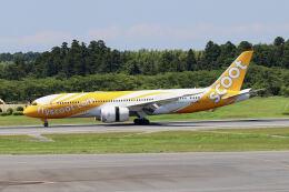 やまモンさんが、成田国際空港で撮影したスクート 787-8 Dreamlinerの航空フォト(飛行機 写真・画像)