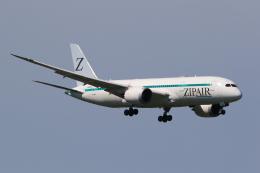 多楽さんが、成田国際空港で撮影したZIPAIR 787-8 Dreamlinerの航空フォト(飛行機 写真・画像)