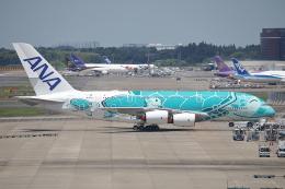 AkilaYさんが、成田国際空港で撮影した全日空 A380-841の航空フォト(飛行機 写真・画像)