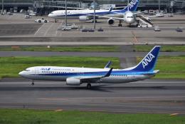 ぬま_FJHさんが、羽田空港で撮影した全日空 737-881の航空フォト(飛行機 写真・画像)