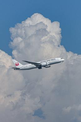 あっくんkczさんが、羽田空港で撮影した日本航空 787-8 Dreamlinerの航空フォト(飛行機 写真・画像)