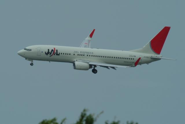 どらネコ★きんぐさんが、羽田空港で撮影した日本航空 737-846の航空フォト(飛行機 写真・画像)