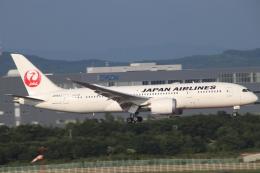 天王寺王子さんが、新千歳空港で撮影した日本航空 787-8 Dreamlinerの航空フォト(飛行機 写真・画像)