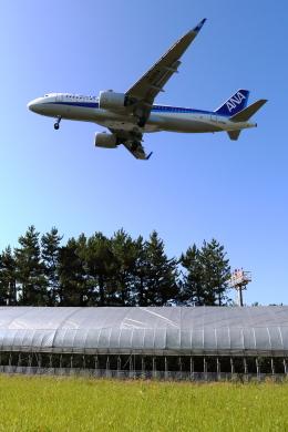 トリトンブルーSHIROさんが、庄内空港で撮影した全日空 A320-271Nの航空フォト(飛行機 写真・画像)