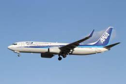 プルシアンブルーさんが、成田国際空港で撮影した全日空 737-881の航空フォト(飛行機 写真・画像)
