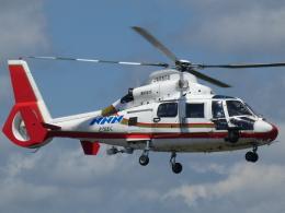 宮城の航空ファンさんが、仙台空港で撮影した東邦航空 AS365N2 Dauphin 2の航空フォト(飛行機 写真・画像)