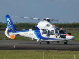 宮城の航空ファンさんが、仙台空港で撮影したオールニッポンヘリコプター AS365N3 Dauphin 2の航空フォト(飛行機 写真・画像)