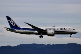 M.airphotoさんが、福岡空港で撮影した全日空 787-8 Dreamlinerの航空フォト(飛行機 写真・画像)