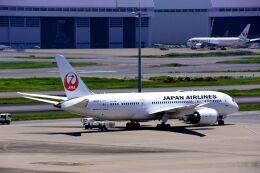 まいけるさんが、羽田空港で撮影した日本航空 787-8 Dreamlinerの航空フォト(飛行機 写真・画像)