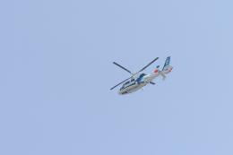 senyoさんが、東京ヘリポートで撮影したオールニッポンヘリコプター AS365N2 Dauphin 2の航空フォト(飛行機 写真・画像)