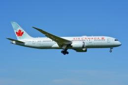 あまるめさんが、成田国際空港で撮影したエア・カナダ 787-8 Dreamlinerの航空フォト(飛行機 写真・画像)
