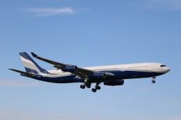 不揃いさんが、成田国際空港で撮影したハイ・フライ・マルタ A340-312の航空フォト(飛行機 写真・画像)