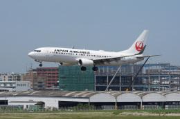 神宮寺ももさんが、福岡空港で撮影した日本航空 737-846の航空フォト(飛行機 写真・画像)