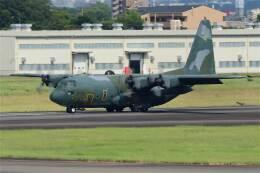 minoyanさんが、名古屋飛行場で撮影した航空自衛隊 C-130H Herculesの航空フォト(飛行機 写真・画像)