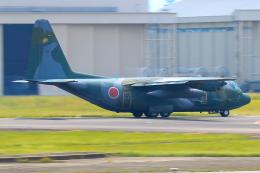 だいふくさんが、名古屋飛行場で撮影した航空自衛隊 C-130H Herculesの航空フォト(飛行機 写真・画像)