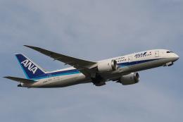KOKI_ANA-Brussels767さんが、羽田空港で撮影した全日空 787-8 Dreamlinerの航空フォト(飛行機 写真・画像)