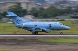 だいふくさんが、名古屋飛行場で撮影した航空自衛隊 U-125A(Hawker 800)の航空フォト(飛行機 写真・画像)