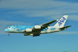 micelさんが、成田国際空港で撮影した全日空 A380-841の航空フォト(飛行機 写真・画像)