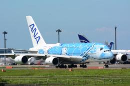 banshee02さんが、成田国際空港で撮影した全日空 A380-841の航空フォト(飛行機 写真・画像)