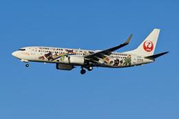 Frankspotterさんが、羽田空港で撮影した日本トランスオーシャン航空 737-8Q3の航空フォト(飛行機 写真・画像)