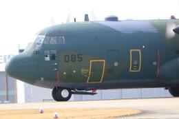 rokko2000さんが、名古屋飛行場で撮影した航空自衛隊 C-130H Herculesの航空フォト(飛行機 写真・画像)