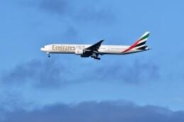 おかめさんが、成田国際空港で撮影したエミレーツ航空 777-31H/ERの航空フォト(飛行機 写真・画像)