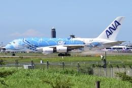 Timothyさんが、成田国際空港で撮影した全日空 A380-841の航空フォト(飛行機 写真・画像)