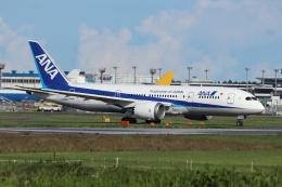 フレッシュマリオさんが、成田国際空港で撮影した全日空 787-8 Dreamlinerの航空フォト(飛行機 写真・画像)