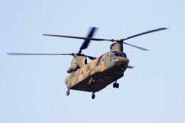 kaeru6006さんが、習志野演習場で撮影した陸上自衛隊 CH-47Jの航空フォト(飛行機 写真・画像)